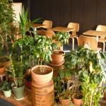 癒される植物たち