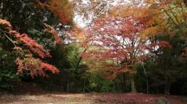 相馬家に所縁の深い愛宕山史跡。一千年の伝統の紅葉です。