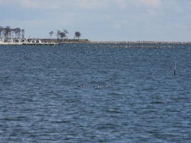 海苔の試験操業も始まった松川浦