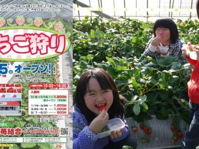 1/15(日)和田観光苺園オープン