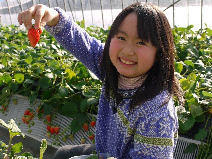 相馬市・和田観光苺園で、笑顔で逢いましょう