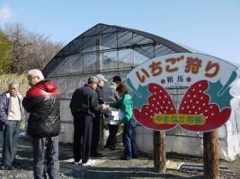 和田観光苺園で、いちご狩り