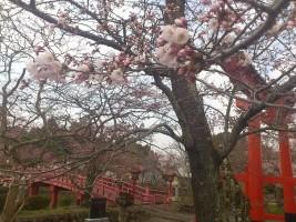【相馬市】涼ヶ岡八幡神社の桜