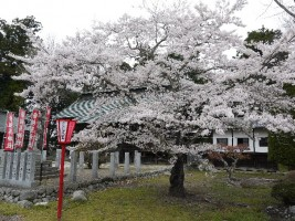 【相馬市】相馬中村城本丸跡に建つ相馬神社