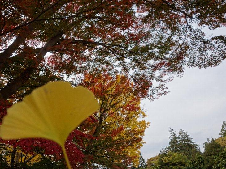 【相馬市】馬陵公園(相馬中村城祉)