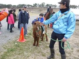 馬やポニーとの乗馬体験