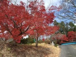 子眉峰神社の紅葉