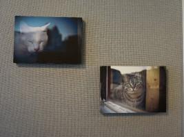 可愛いネコたちの写真
