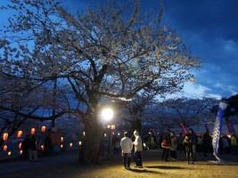 夜桜がライトアップされました
