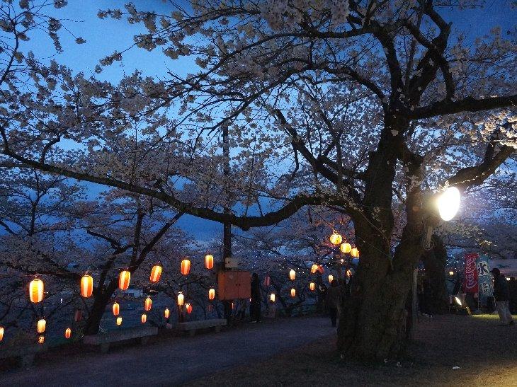 幻想的な(?)桜・・・