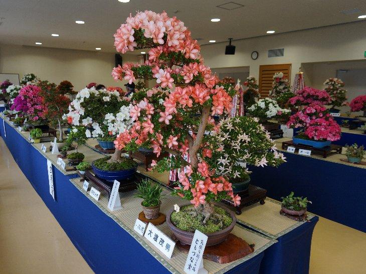 20140609t_haramachi_satsuki004