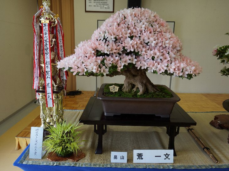 20140609t_haramachi_satsuki011
