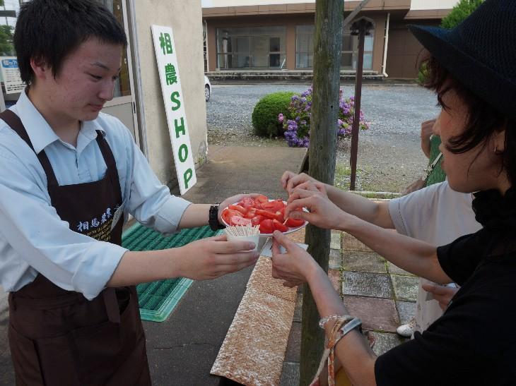 トマトの試食