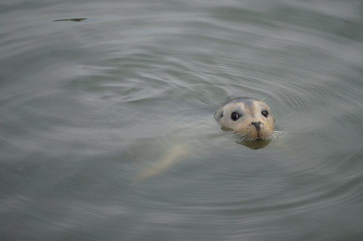 よく見ると泳ぎが見えるよ