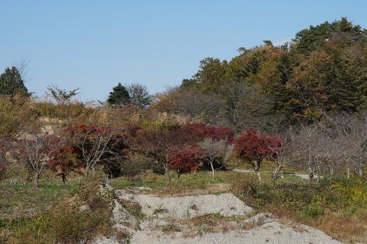 右近清水の紅葉