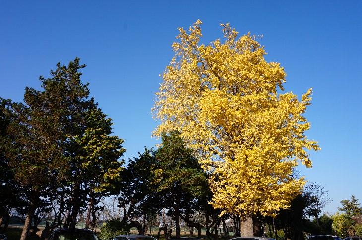 馬陵公園の紅葉