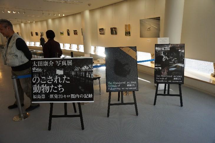 太田 康介さんの写真展『のこされた動物たち‥』