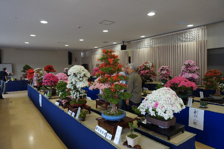 さつき花季展示会