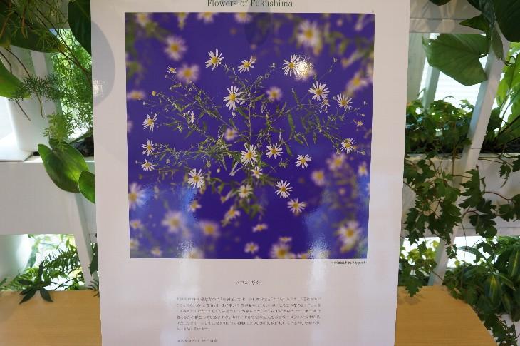 福島の花 写真展 ~Flowers of Fukushima~