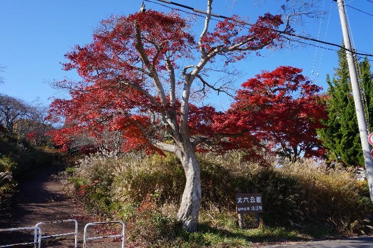 【浪江町】丈六公園