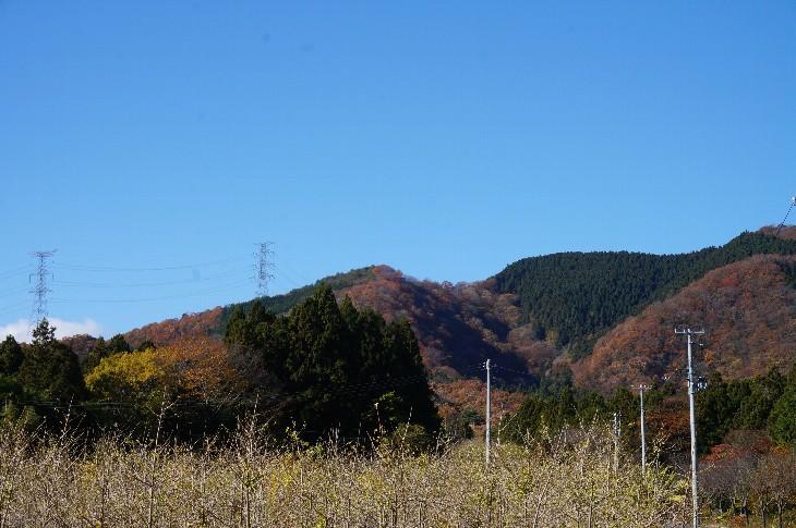 鹿狼山の紅葉