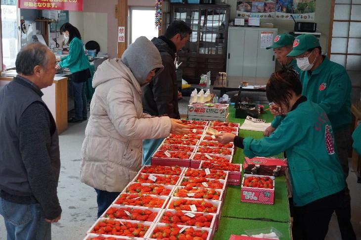 朝採りの新鮮ないちごの販売