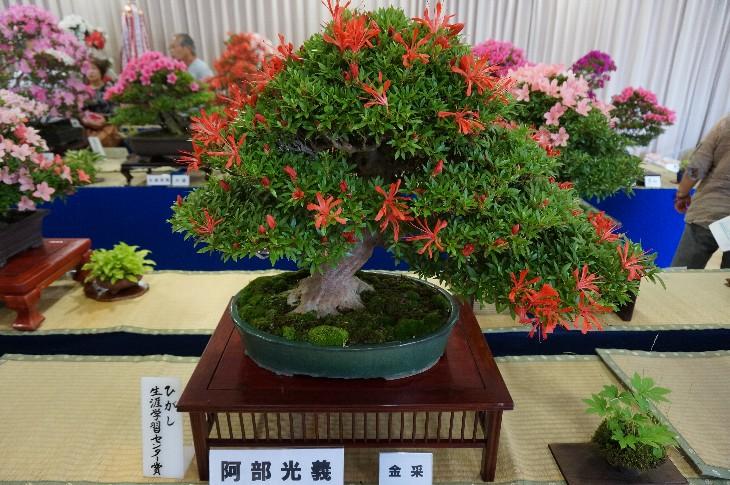 盆栽一部:ひがし生涯学習センター賞