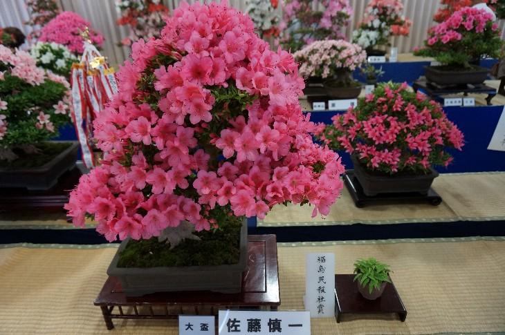 盆栽一部:福島民報社賞