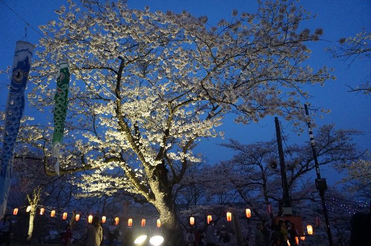 原町区夜の森公園