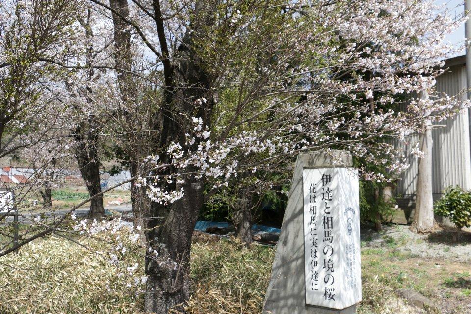 [相馬市]伊達と相馬の境の桜