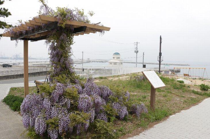 【相馬市】笠岩公園の藤の花