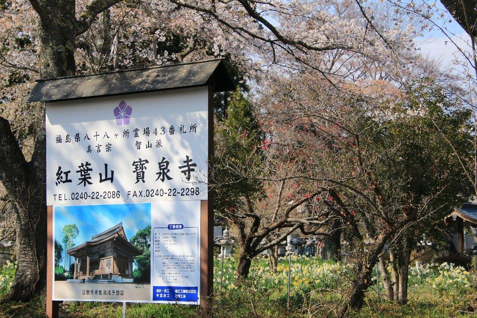 2020相双の桜[富岡町]紅葉山 寶泉寺
