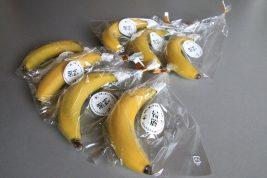 バナナ「綺麗」_14