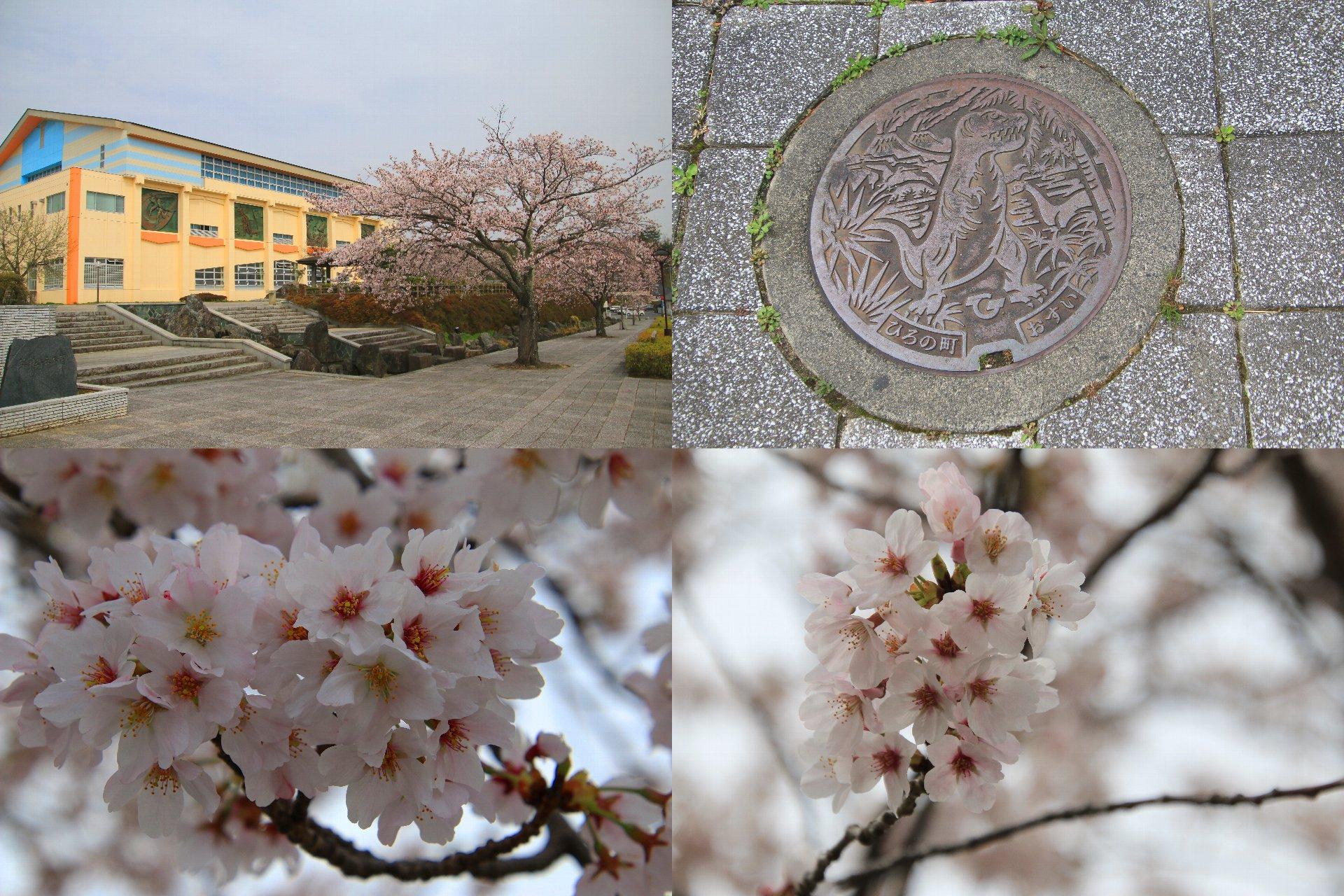 相双桜2021-築地ヶ丘公園(広野町)
