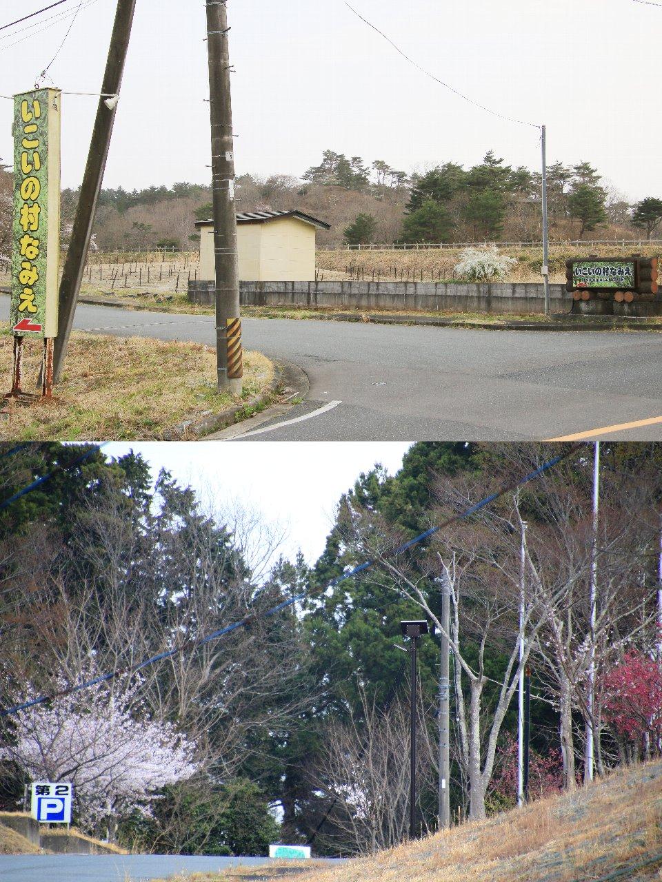 相双桜2021-いこいの村なみえ(浪江町)