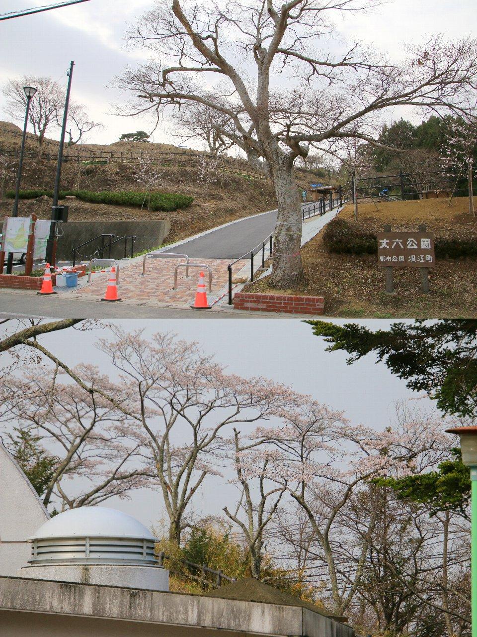 相双桜2021-丈六公園(浪江町)