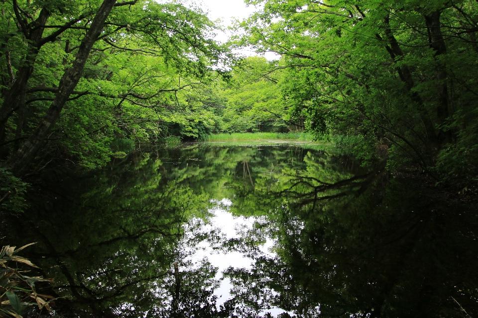 平伏沼 - 川内村14