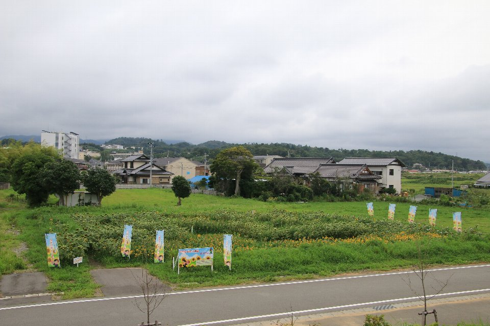 広野ひまわり迷路2021_1