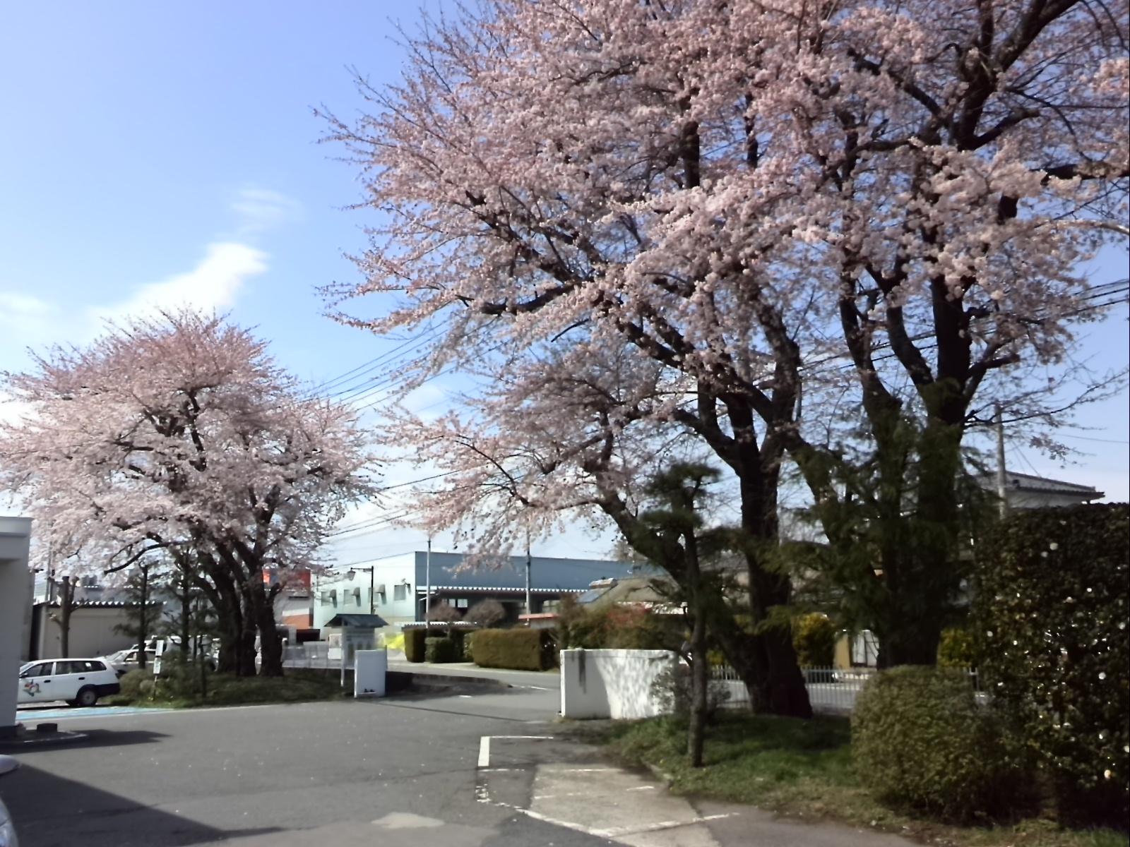 20150406sakura